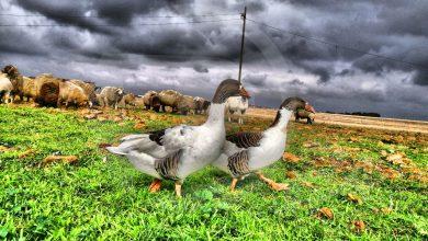 Photo of صورة من ديرتنا